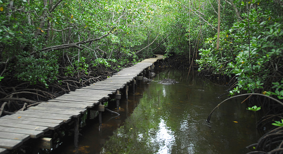Eco Tourism「Exploring the mangrove」:スマホ壁紙(9)