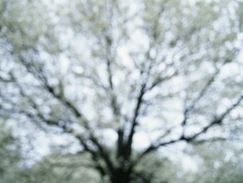 Defocus「Tree limbs, low angle view (defocused)」:スマホ壁紙(19)