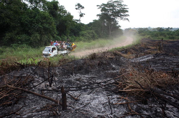 Rainforest「Congo Battles To Save Wildlife After Years Of War And Poaching」:写真・画像(3)[壁紙.com]