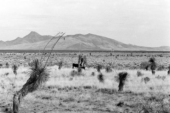 Mountain「New Mexico」:写真・画像(18)[壁紙.com]