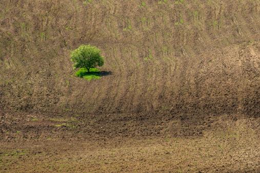 Plowed Field「arable land」:スマホ壁紙(19)