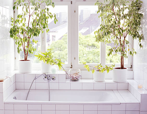 Bathroom interior, plants and windows alongside bathtub:スマホ壁紙(壁紙.com)