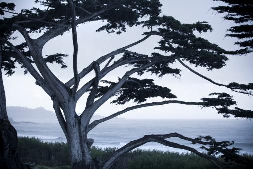 Big Sur「Tree silhouette USA, California, Big Sur, Coastline and sea」:スマホ壁紙(4)