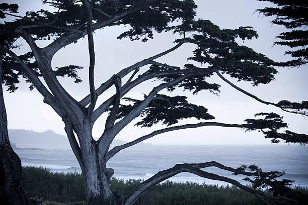 Tree silhouette USA, California, Big Sur, Coastline and sea:スマホ壁紙(壁紙.com)