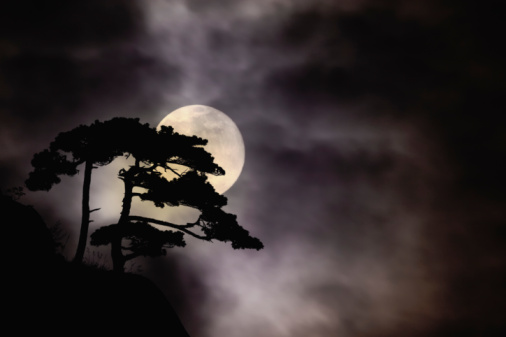 Moon「Tree silhouette and moon (Digital Composite)」:スマホ壁紙(6)