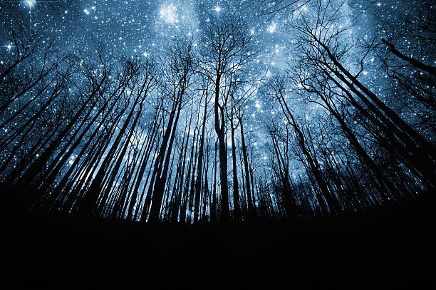 森と星空のまとめ:2007年02月27日(壁紙.com)