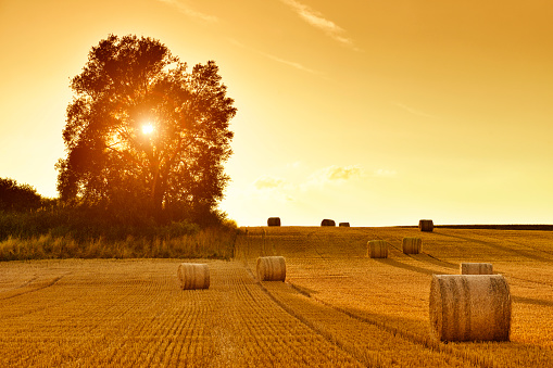 Agriculture「Hay Bales and Field Stubble in Golden Sunset」:スマホ壁紙(18)