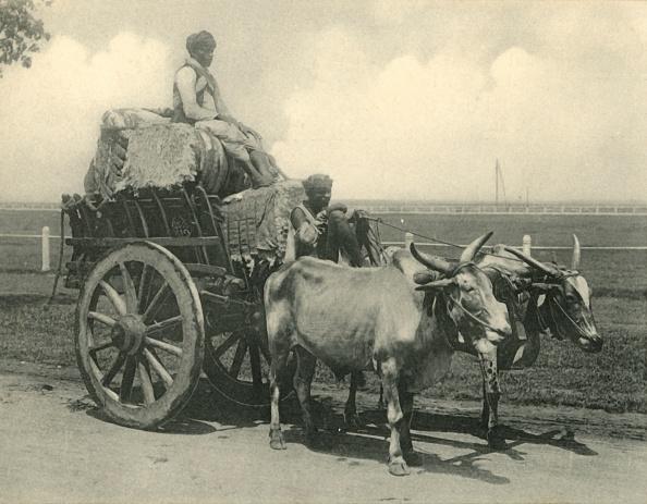 Transportation「Bullock Cart  Creator: Clifton & Co」:写真・画像(3)[壁紙.com]