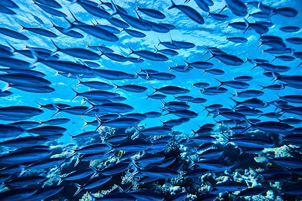 tropical fishes underwater:スマホ壁紙(壁紙.com)