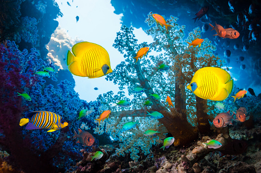 Soft Coral「Tropical fish on coral reef」:スマホ壁紙(11)
