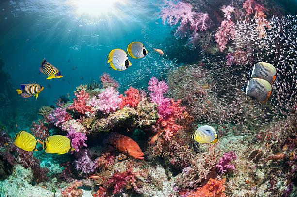Tropical fish over coral reef:スマホ壁紙(壁紙.com)