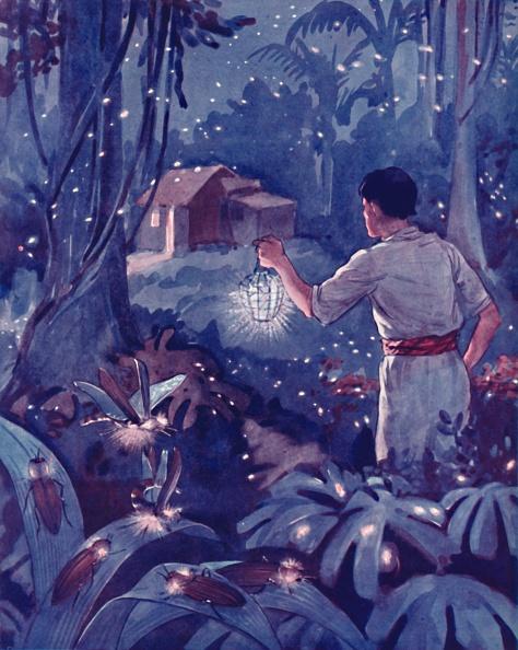 葉・植物「Tropical Fireflies As Dancing Points Of Light」:写真・画像(13)[壁紙.com]
