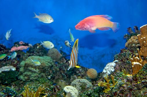 熱帯魚「Tropical Fish swimming in aquarium」:スマホ壁紙(18)