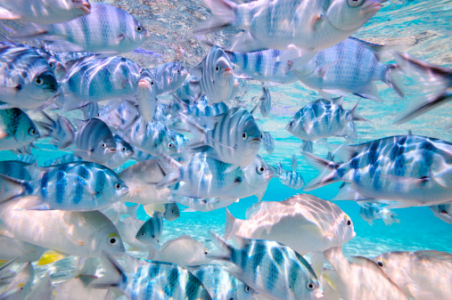 Ecosystem「tropical fishes in crystal clear water」:スマホ壁紙(7)