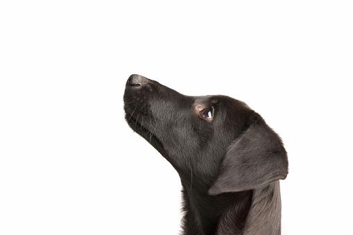 Animal Head「watchful young dog」:スマホ壁紙(0)