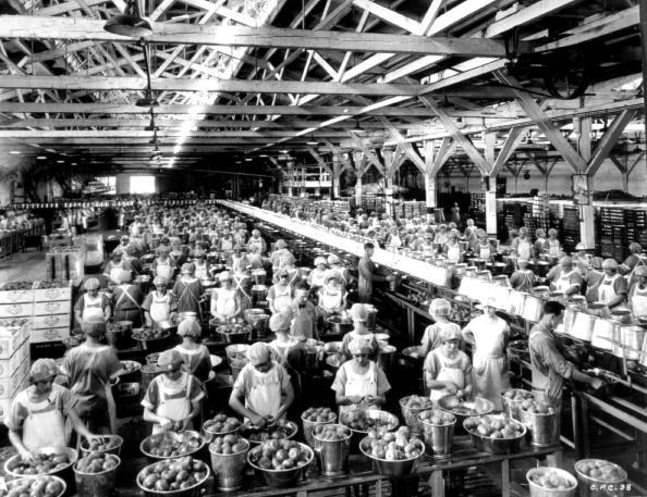 Tomato「Canning Industry」:写真・画像(17)[壁紙.com]