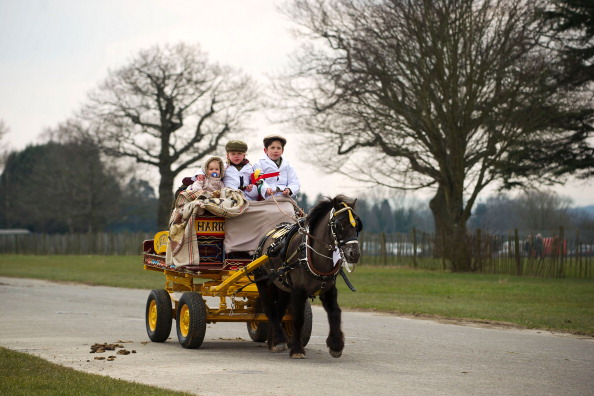 Vertebrate「Riders Display Their Horses And Carriages During The London Harness Horse Parade」:写真・画像(12)[壁紙.com]