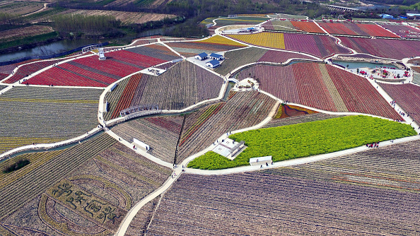 Agriculture「Aerial View Of Tulips In Zhumadian」:写真・画像(9)[壁紙.com]