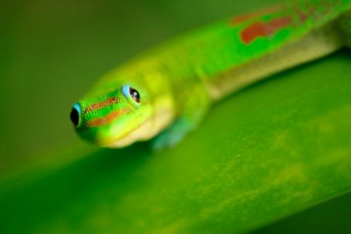 Frond「Green Gecko」:スマホ壁紙(15)