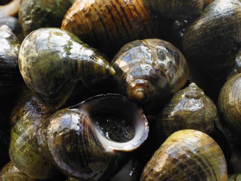 snails「Snails」:スマホ壁紙(16)