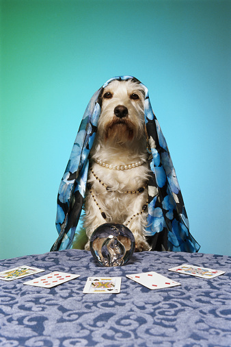 Schnauzer「Dog dressed as fortune teller, at table with crystal ball」:スマホ壁紙(17)