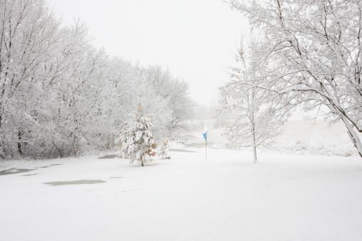 雪が降る「ユキコ冬の風景、木々と巣箱」:スマホ壁紙(6)