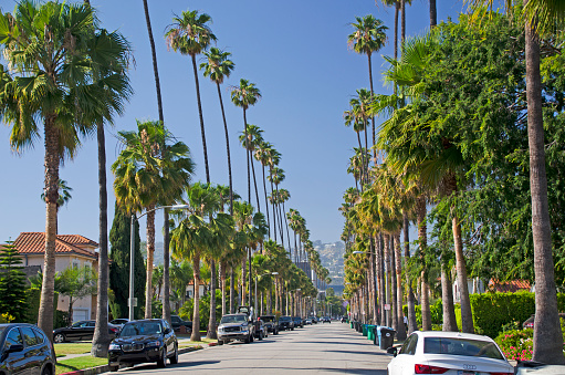 交通量「Beverly Hills Palm Tree lined streets」:スマホ壁紙(8)