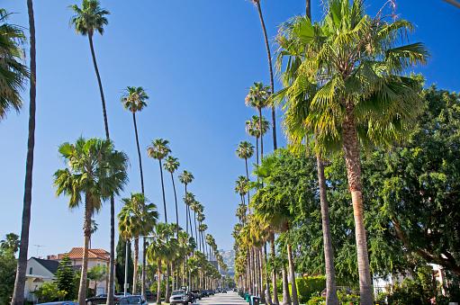 Treelined「Beverly Hills Palm Tree lined streets」:スマホ壁紙(6)