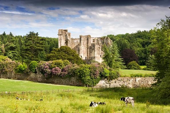 Pasture「Old Wardour Castle」:写真・画像(17)[壁紙.com]
