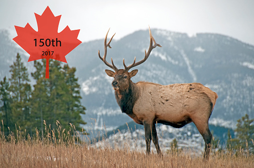 Canada Day「Canadian Maple Leaf in the Rocky Mountains  Anniversary 2017- 150th」:スマホ壁紙(10)