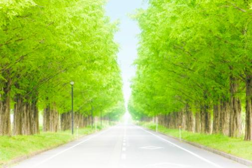 Japan「Metasequoia trees lining street, Takashima, Shiga Prefecture, Japan」:スマホ壁紙(6)