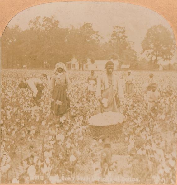 Cotton「Cotton-Picking., c1900」:写真・画像(6)[壁紙.com]