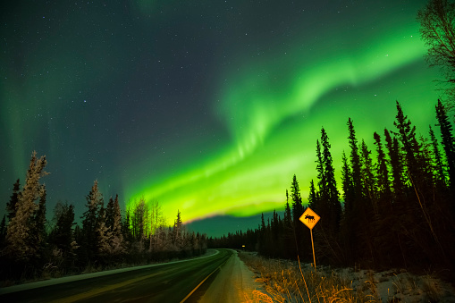 星空「The aurora glows over a moose crossing sign along Sheep Creek Road」:スマホ壁紙(14)