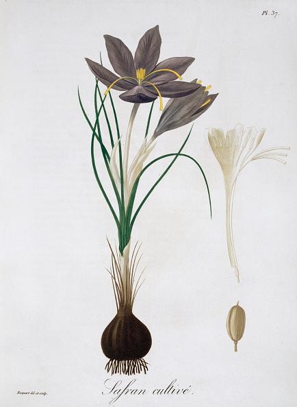 春「Saffron Crocus 1821」:写真・画像(2)[壁紙.com]