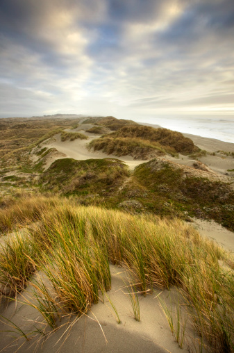 Pacific Ocean「Beach Grass and Sand Dunes at Sunset」:スマホ壁紙(5)