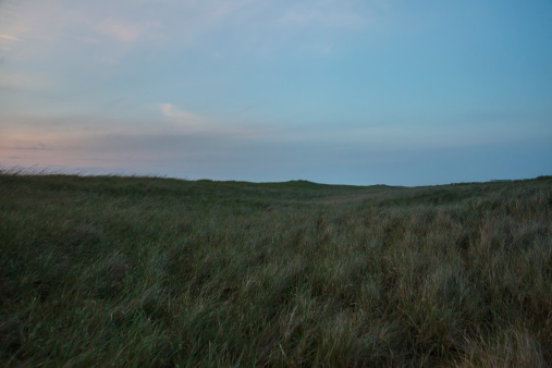 Cannon Beach「Beach grass and sunset skies above Pacific dunes」:スマホ壁紙(13)