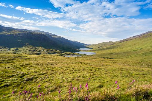 Wildflower「Three paternoster lakes connected by streams : Loch an Eilein, Loch Ellen and Loch Àirde Glais on the Isle of Mull, Inner Hebrides Scotland.」:スマホ壁紙(11)