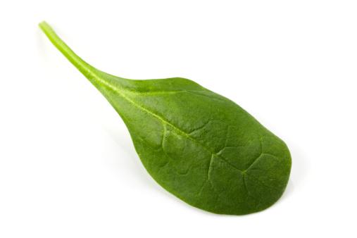 Spinach「Baby Spinach Leaf」:スマホ壁紙(18)