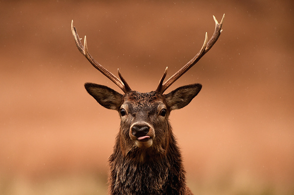 季節「Red Deer Graze In Glen Etive」:写真・画像(9)[壁紙.com]