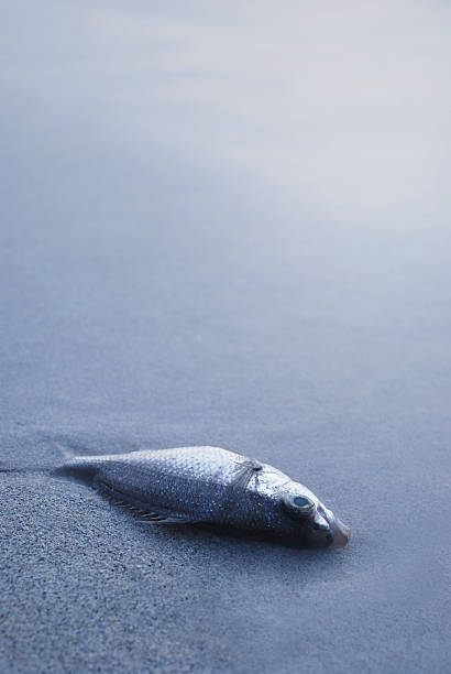 Dead Fish Lying in Sand on Shore:スマホ壁紙(壁紙.com)