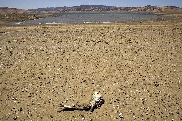 Silicon「Schwarzenegger Discusses State Water Crisis At San Luis Reservoir」:写真・画像(1)[壁紙.com]