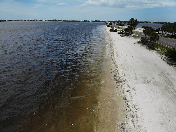 Gulf Coast States「Toxic Red Tide On Florida's Southwest Coast Killing Hundreds Of Turtles And Fish」:写真・画像(1)[壁紙.com]