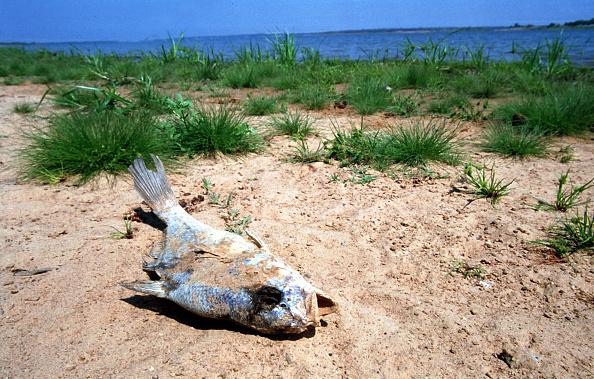 Grass「Drought in Northern Texas」:写真・画像(14)[壁紙.com]