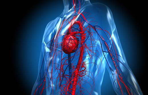Heart「The Cardiovascular System」:スマホ壁紙(7)