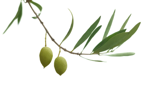 Hope - Concept「Olive branch」:スマホ壁紙(9)