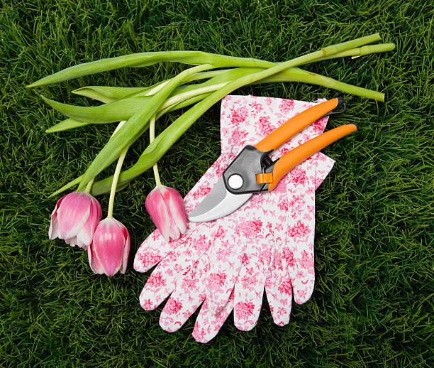 USA, Illinois, Metamora, Tulips, gardening gloves and shears on grass:スマホ壁紙(壁紙.com)