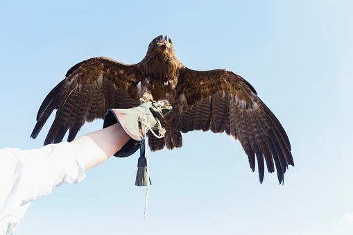 Beak「Falcon, Gawking at his prey」:スマホ壁紙(10)