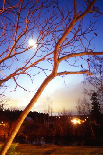 月「Full moon over sumac trees」:スマホ壁紙(15)