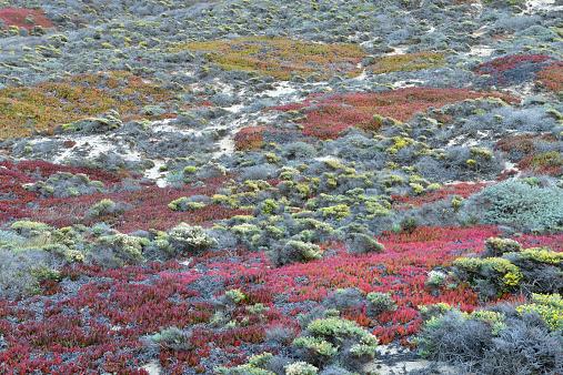 Big Sur「Flora and sand dunes at Big Sur」:スマホ壁紙(8)