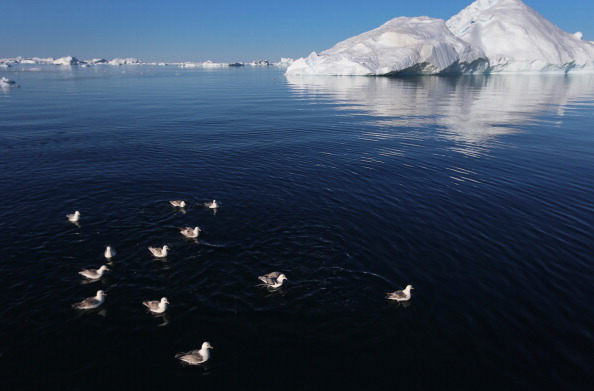 ヤコブスハブン氷河「Greenland:  A Laboratory For The Symptoms Of Global Warming」:写真・画像(13)[壁紙.com]